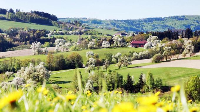 © weinfranz / Frühling an der Moststraße, Österreich / Zum Vergrößern auf das Bild klicken