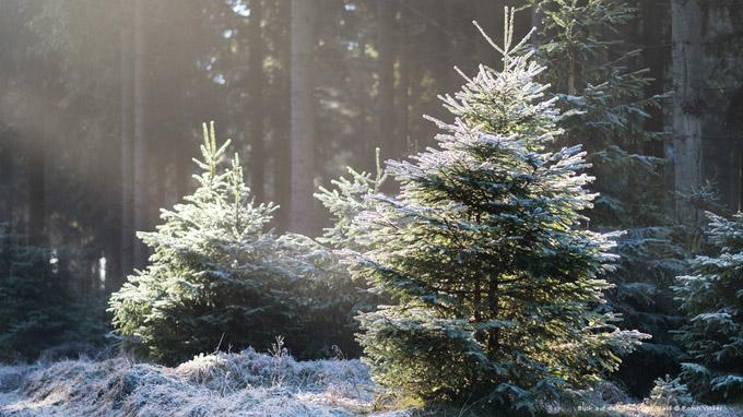 © Robin Visser / Thüringer Wald, DE - verschneit / Zum Vergrößern auf das Bild klicken
