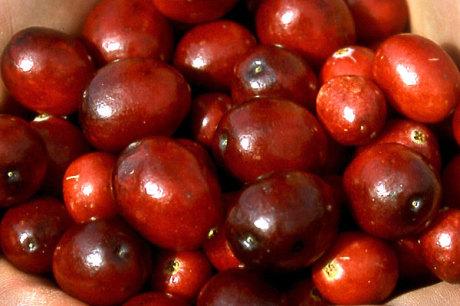 cranberrys saures gegen entz ndungen. Black Bedroom Furniture Sets. Home Design Ideas