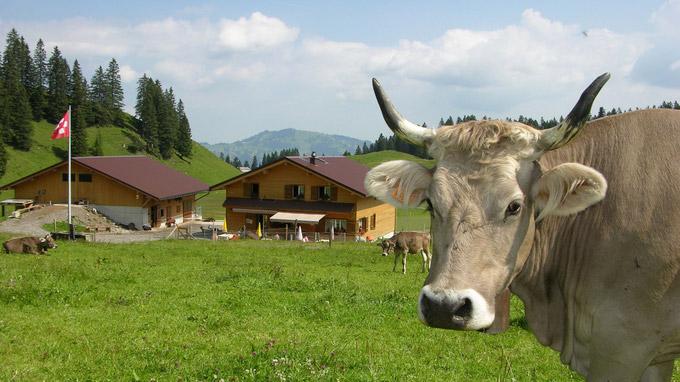 © Schwyz Tourismus / Stoos - Alp Tröligen / Zum Vergrößern auf das Bild klicken