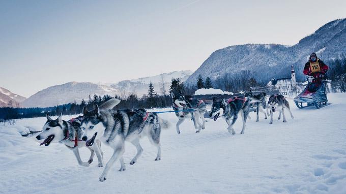© TVB Pillerseetal / Pillerseetal, Tirol - Schlittenhunderennen / Zum Vergrößern auf das Bild klicken