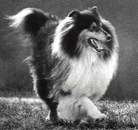 Dogs pictures / fotografije pasa N_hund