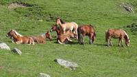 © Edith Spitzer, Wien / Val d`Aran, Spanien - Pferde / Zum Vergrößern auf das Bild klicken