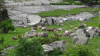 © Edith Spitzer, Wien / Vall de Boi, Spanien - Nationalpark_Kuhherde / Zum Vergrößern auf das Bild klicken