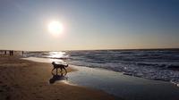 © Angelika Mandler-Saul / Scheveningen, NL - Abends am Strand