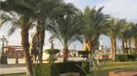 © Edith Köchl, Wien / Sharm el Sheikh, Ägypten - Palmenallee / Zum Vergrößern auf das Bild klicken