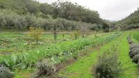 © Edith Köchl, Wien / Cascais, Portugal - Kräuter- und Gemüse-Farm / Zum Vergrößern auf das Bild klicken