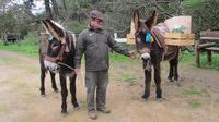 © Edith Köchl, Wien / Quinta do Pisao, Portugal - Farmer / Zum Vergrößern auf das Bild klicken