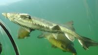 © 55PLUS Medien GmbH, Wien / Modra, CZ - Süsswasser-Aquarium_Fische / Zum Vergrößern auf das Bild klicken