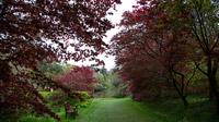 © Anita Arneitz & Matthias Eichinger / Mount Usher Gardens, Nordirland_10 / Zum Vergrößern auf das Bild klicken