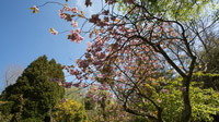 © Anita Arneitz & Matthias Eichinger / Mount Usher Gardens, Nordirland_12 / Zum Vergrößern auf das Bild klicken