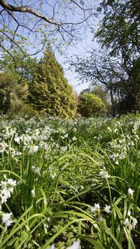 © Anita Arneitz & Matthias Eichinger / Mount Usher Gardens, Nordirland_14 / Zum Vergrößern auf das Bild klicken