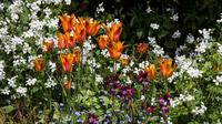 © Anita Arneitz & Matthias Eichinger / Mount Usher Gardens, Nordirland_3 / Zum Vergrößern auf das Bild klicken