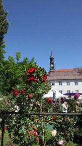 © Tölzer Rosentage / Klostergärten, Bad Tölz / Zum Vergrößern auf das Bild klicken