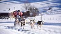 © wmp Martin Weigl / Schlittenhunde im Pillerseetal, Tirol / Zum Vergrößern auf das Bild klicken