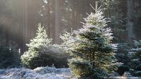 © Robin Visser / Thüringer Wald, DE - verschneit