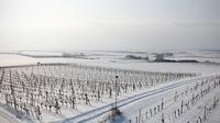 © FC Scheiber / Winter Weingärten - FC_Scheiber / Zum Vergrößern auf das Bild klicken