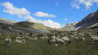 © Schwyz Tourismus / Bisisthal, Schweiz / Zum Vergrößern auf das Bild klicken