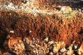 Castelvecchio - Karsterde / Zum Vergrößern auf das Bild klicken