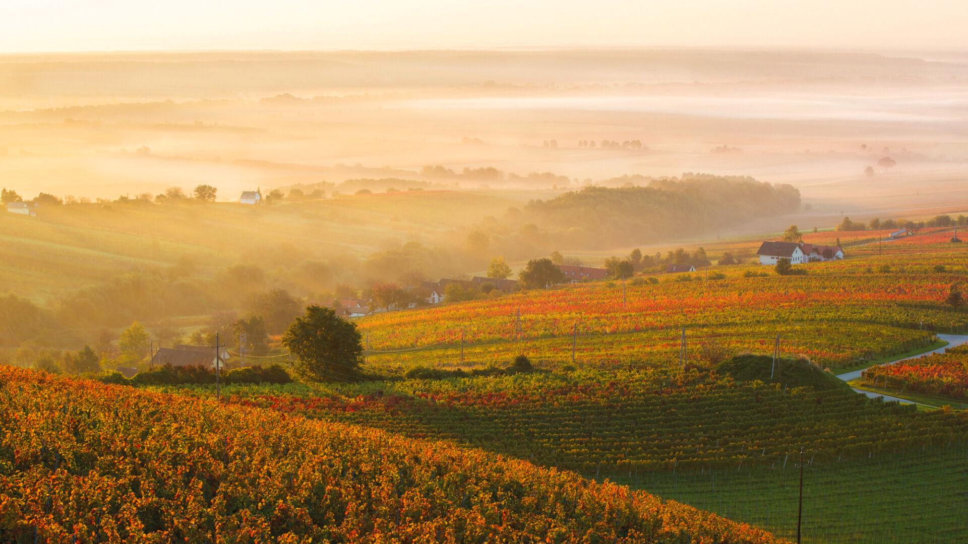 © Burgenland Tourismus / Marc Graf / Burgenland - Herbststimmung in der Weinidylle