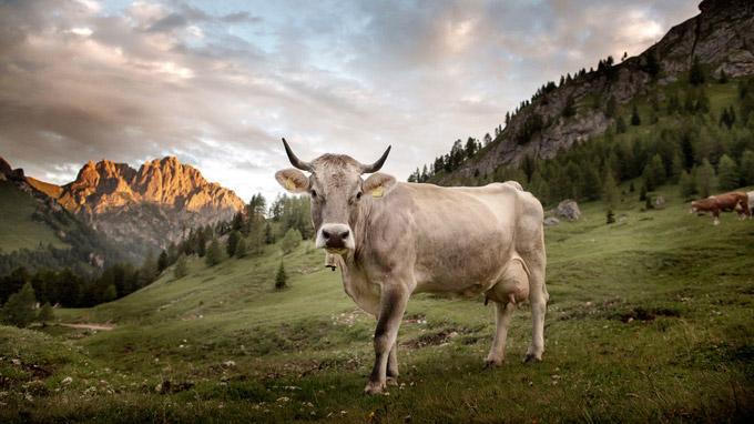 © Daniele Lira / Val Contrin, Italien / Zum Vergrößern auf das Bild klicken