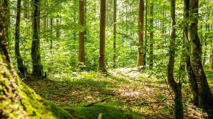 © Tourismus Lenggries / Adrian Greiter / Lenggries, Bayern - Waldwege / Zum Vergrößern auf das Bild klicken