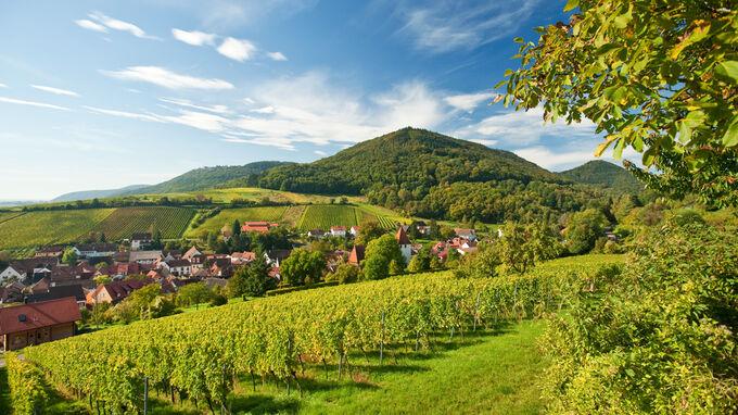 © Rheinland-Pfalz Tourismus GmbH / Dominik Ketz / Leinsweiler, Rheinland-Pfalz - Weinanbau / Zum Vergrößern auf das Bild klicken