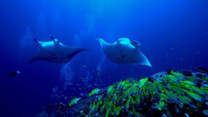 © Katja Haselkuss / Helengeli, Malediven - Riff / Zum Vergrößern auf das Bild klicken