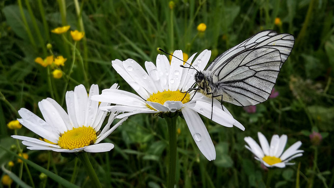 © Tiroler Umweltanwaltschaft / Alpbachtal, Tirol / Zum Vergrößern auf das Bild klicken