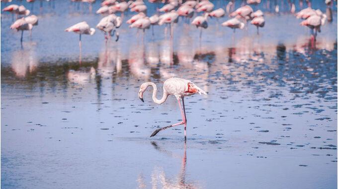Provence, Frankreich - Flamingos