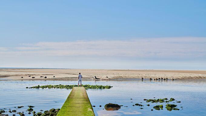 Borkum, DE - Seehundbank in der Nordsee