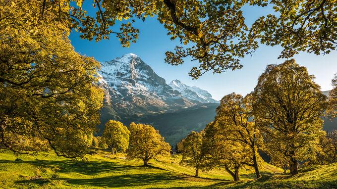 © Switzerland Tourism / Martin Maegli / Grindelwald, CH - Herbstbäume / Zum Vergrößern auf das Bild klicken