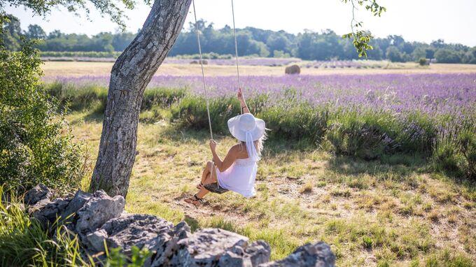 Karst, Slowenien - Lavendelfelder Ivanji Grad