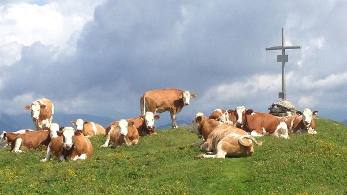 © Regina Hrbek / Kühe auf der Alm / Zum Vergrößern auf das Bild klicken