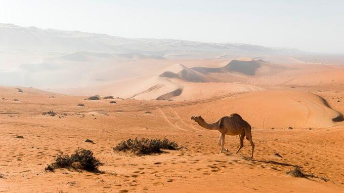 © unsplash / Oman, Wüste / Zum Vergrößern auf das Bild klicken