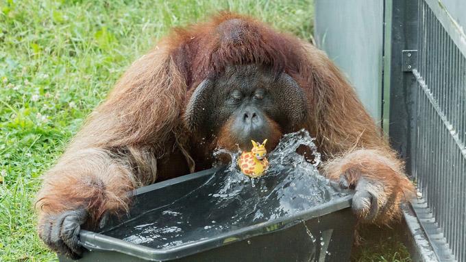 © Daniel Zupanc / Tiergarten Schönbrunn, Wien - Hitze_Vladimir_ / Zum Vergrößern auf das Bild klicken