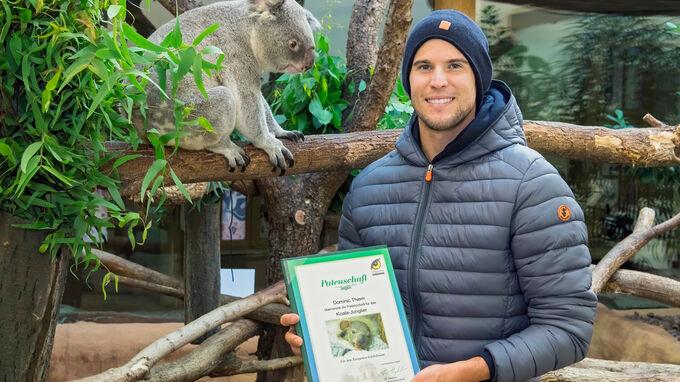 © Daniel Zupanc / Tiergarten Schönbrunn, Wien: Dominic Thiem mit Koala / Zum Vergrößern auf das Bild klicken