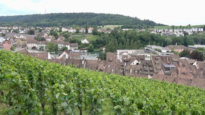 Schaffhausen, CH - Munot Weingarten 2021