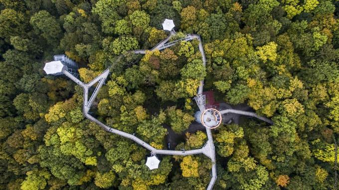 © Thüringer Tourismus GmbH / Schönstedt - Baumkronenpfad im Nationalpark Hainich / Zum Vergrößern auf das Bild klicken