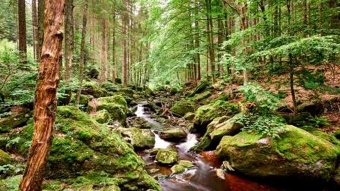 © Marco Felgenhauer, Woidlife Photography / Bayerischer Wald, DE - Steinklamm in Spiegelau / Zum Vergrößern auf das Bild klicken
