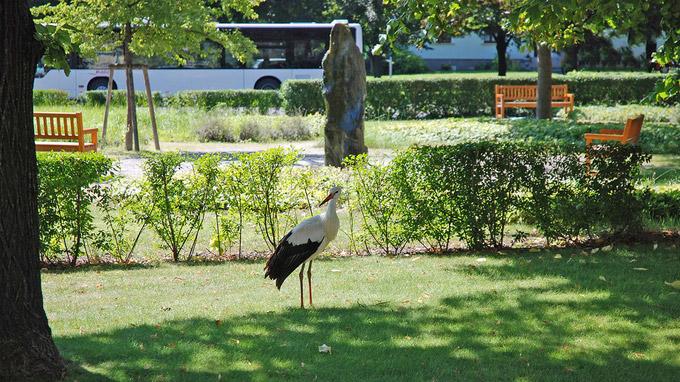 © Gemeinde Marchegg / Schlosspark Marchegg, Niederösterreich / Zum Vergrößern auf das Bild klicken