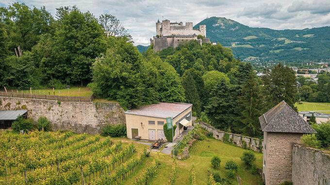 Salzburg Weingarten mit Festung