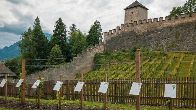 Salzburg Paris Lodron Weingarten-Zwinger