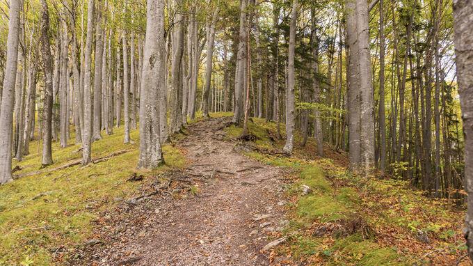 Waidhofen, NÖ - Herbstlicher Wald