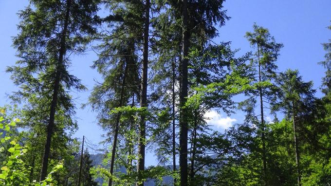 © www.55PLUS-magazin.net | Edith Spitzer, Wien / Almtal, OÖ - Waldgebiet / Zum Vergrößern auf das Bild klicken