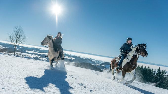 © Oberösterreich Tourismus / David Lugmayr / Mühlviertel, OÖ - Reiten im Winter / Zum Vergrößern auf das Bild klicken
