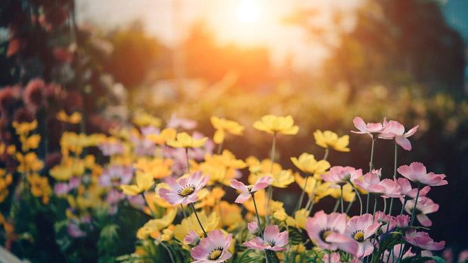 © toodlingstudio auf Pixabay / Blühender Garten / Zum Vergrößern auf das Bild klicken