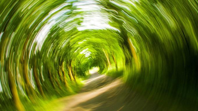 © kalhh@pixabay.com - trees-358418_1280.jpg / Schwindel / Zum Vergrößern auf das Bild klicken