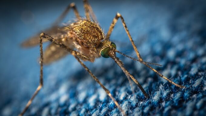 mosquito 3743404 1920