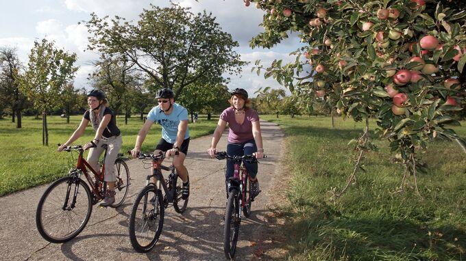© Südpfalz / Südpfalz, Rheinland-Pfalz - Radfahren / Zum Vergrößern auf das Bild klicken